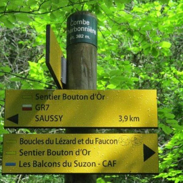 sentier bouton d'or 2