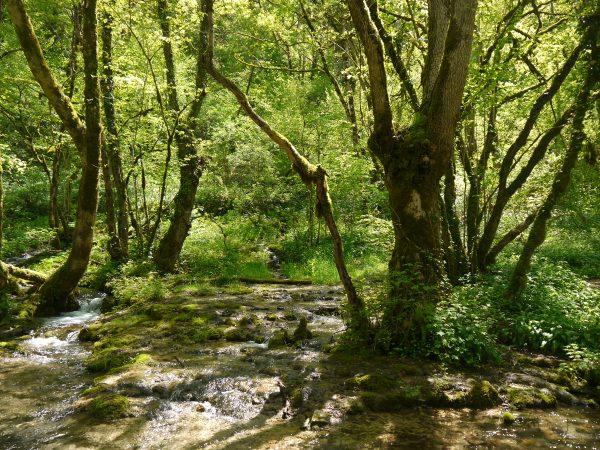 Balade forêts Seine et Suzon